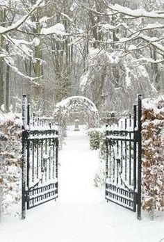 Wintery gates in the snow