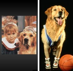 After Full House, Buddy (who played Comet) went on to play Buddy in Air Bud (1997) and Air Bud: Golden Receiver (1998). We hate to be the messenger, but Buddy died at the age of 9 from lung cancer. We'll never forget you, Buddy!.....I'm pretty sure my heart just broke a little...