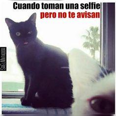 Jajaja cualquier parecido Es pura coincidencia.  #Selfie #gatos #gatonegro #Mascota #catsofinstagram #gatosdeinstagram #intacats #picoftheday #SrElMatador #ElSalvador