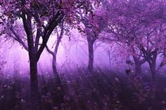 mystical forest purple backgrounds ethereal lavender misty nature landscape fantasy visit mural beauty posters things