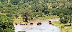 #TarangireNationalPark is one of the largest national parks in Northern #Tanzania. The park is famous for its huge number of Elephants and tree climbing lions which are attract visitors very much. http://www.globalwidesafaris.com/tarangire-national-park