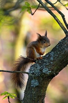What a sad looking little squirrel. No idea if it's still a baby or an adult of a small squirrel species.