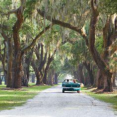 Moss-draped oaks line a road near Charleston, South Carolina. (Photo: Chris M. Rogers )