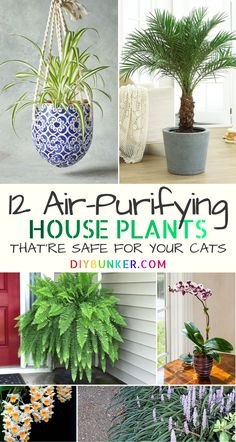 These air purifying house plants are even safe for cats If you are on the hunt for pet safe indoor house plants NASA ranks these as the best air cleaning options plants garden lifehacks homehack hack # Cat Safe House Plants, Houseplants Safe For Cats, Common House Plants, Cat Plants, Best Indoor Plants, Indoor Garden, Indoor Plants Clean Air, Veg Garden, Outdoor Plants