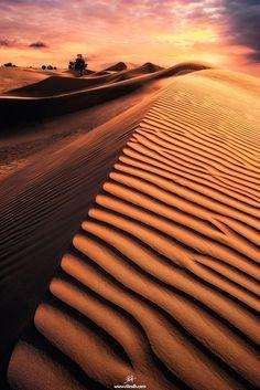 Horned Viper by Rilind H Dubai. Desert, sand, dunes