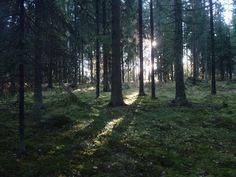 http://fc03.deviantart.net/fs71/f/2011/284/3/b/finnish_forest_by_shortti-d4cica8.jpg