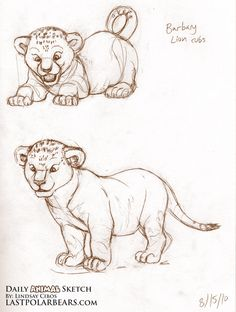 Image from http://www.lastpolarbears.com/wp-content/uploads/2010/08/Daily_Animal_Sketch_023.jpg.