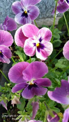 My Flower, All Pictures, Blossoms, Annie, Garden, Plants, Happy, Flowers, Garten