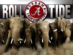"""THIS IS A GREAT PHOTO OF """"ALABAMA FOOTBALL"""" AND IN THE STATE OF ALABAMA THERE IS A UNIVERSITY WHICH IS THE BEST IN THE COUNTRY!! THAT IS """"THE UNIVERSITY OF ALABAMA"""" AND WE JUST HAPPEN TO HAVE THE GREATEST TRADITION IN COLLEGE FOOTBALL WHERE OUR TEAM REPRESENTS OUR UNIVERSITY AND WE TAKE FOOTBALL SERIOUS AS A """"BAMA FOOTBALL FAN NATION!!"""" ROLL TIDE!!"""