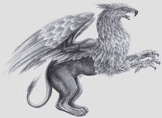 Griffin by Canyx on DeviantArt Magical Creatures, Fantasy Creatures, Gryphon Tattoo, Griffin Mythical, Griffin Tattoo, Jungle Images, Legends And Myths, Dark Art Drawings, Fashion Illustration Sketches