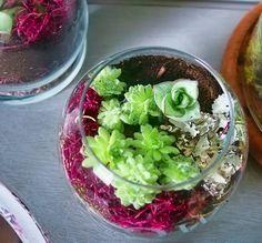 Succulent Terrariums