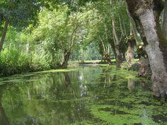 Green Venice (Marais poitevin) <3