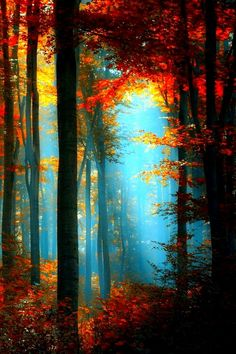Fall + Nature's Stained Glass + Orange and Yellow Leaves with Turquoise Sunlight Shining Through + Forrest