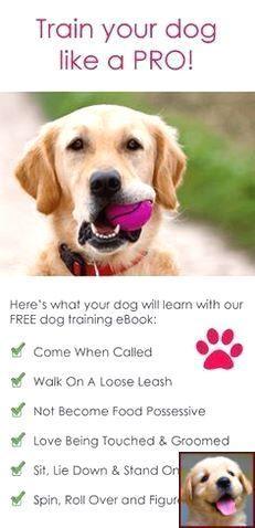 How To Train A Deaf Dog To Stop Bitinghow To Train A Deaf Dog To