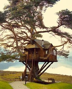 Tree house, in Scotland: Need to visit this lodge so I can dine in the tree house. Cool Tree Houses, Tree House Designs, In The Tree, Play Houses, Cave Houses, Dream Houses, My Dream Home, Dream Big, Rustic Homes