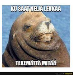 I now make memes myself 😊 Troll, Life Is Good, Haha, Memes, Funny, Animals, Instagram, Fitness, Animales