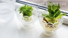 Try your hand at regrowing veggies from scraps