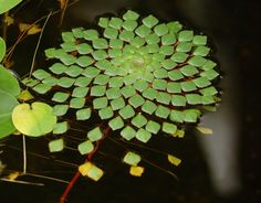 25 Examples Of Perfect Geometry Found In Nature