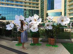 В краю магнолий, моя любовь с Сочи, подобна любви с первого взгляда! 10 лет я живу в этом городе и ни дня не пожалела, что я здесь! Люблю тебя, Сочи!  Оформление юбилея в ресторане @lighthousesochi  #sochi #summer #сочи #флористсочи #оформлениесвадьбы #цветысочи #магнолии #flowerssochi #самыеяркиецветы #juicyflowers #оформлениемероприятийсочи