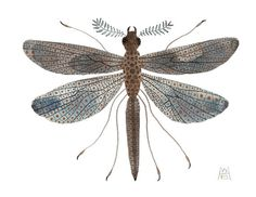 Giant Damselfly No. 6 original watercolor painting by Golly Bard