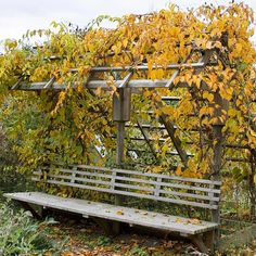 Add Form to Function - Love the way this would add cool shade to the bench in Summer, and gorgeous color in the fall!