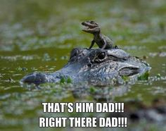 Baby crocodile - Thats him dad // Posted on www.jokideo.com