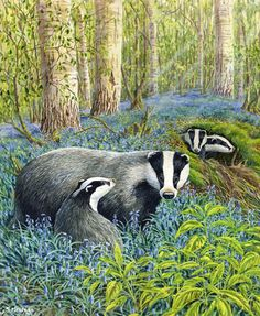 """""""Badgers"""" by Stephen Message. Watercolour."""