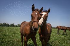 Awesome Again's colt being nuzzled by another foal.