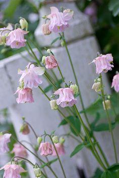 solrum trädgård