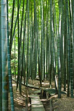 Bamboo isn't a form of wooden, however a form of grass. It's best to take into consideration the position of your backyard. There are a number of methods to start a backyard. Beautiful World, Beautiful Gardens, Beautiful Places, Bamboo Forest Japan, Landscape Design, Garden Design, Bamboo Plants, Bamboo Tree, Jolie Photo