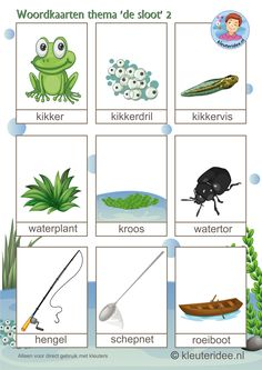 Woordkaarten voor kleuters, thema 'de sloot'2, kleuteridee.nl, preschool pond theme Learn Dutch, Dutch Language, Sensory Boxes, Pond Life, Water Pond, Daycare Crafts, Tot School, Fauna, Foreign Languages