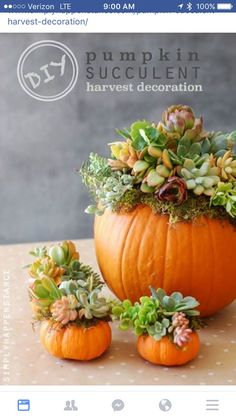 Succulents for Fall