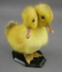 two headed taxidermy duckling, despite the abnormality still cute.