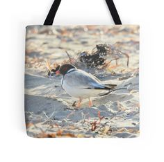 Hooded Plover 1 by BirdBags Small & Large