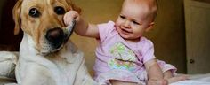 Cute Photos of Babies Growing Up with Dogs I love you Cute Puppy Videos, Funny Animal Videos, Funny Animals, Cute Animals, Pet Videos, Baby Videos, Viral Videos, Funny Videos, Dogs And Kids
