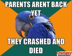 paranoid parrot parents died
