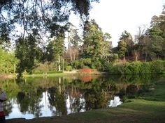 Bedgebury pinetum on a lovely spring day in 2013.
