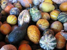 Gourds at Whispering Orchards