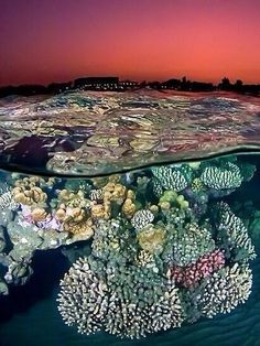 Twitter / Earth_Pics: Coral sunset ~ Red Sea, Egypt ...