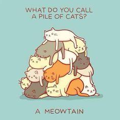 Meowtain crazy cats, meowtain, anim, kitten, funni, cat jokes, humor, crazy cat lady, cat memes