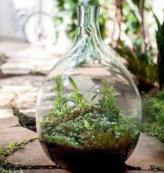Home Decor and Items to Enhance with Style Terrarium Centerpiece, Moss Terrarium, Garden Terrarium, Terrarium Ideas, Bottle Garden, Water Garden, Small Gardens, Outdoor Gardens, Aquatic Plants