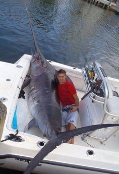 760lb #swordfish