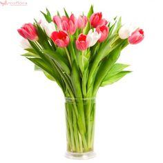 Perfect duo - Buchet de 17 lalele albe si rosii Tulips, Bouquet, Bouquet Of Flowers, Bouquets, Tulip, Floral Arrangements