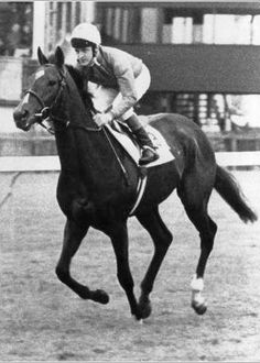 Storm Bird (Northern Dancer) was a tidy, beautiful colt and the syndicate went to one million USD for him. The juvenile was undefeated in his first year on the turf and thought to be the next Epsom Derby winner.