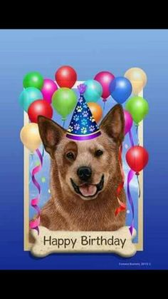 Happy Birthday Directives for the Heeler Groups Pinterest