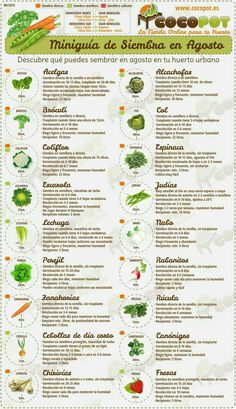 Irresistible What Is Hydroponic Gardening Ideas. Glorious What Is Hydroponic Gardening Ideas. Hydroponic Farming, Hydroponic Growing, Hydroponic Gardening, Hydroponics, Organic Gardening, Container Gardening, Gardening Tips, Aquaponics System, Indoor Gardening