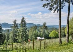 Orcas Island, #sanjuanislands vacation rental. Notched into the side of the mountain, at the base of a sprawling apple orchard, is where you will find the Cider House  bungalow. A perfect, peaceful couple's retreat, this home showcases the best views #OrcasIsland has to offer.