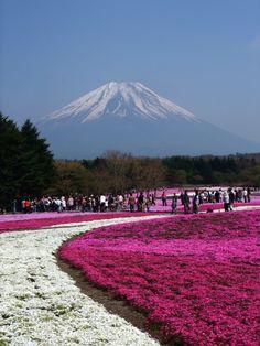 Japan: Cherry Tree park