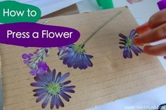 How to Properly Press a Flower--good to know for all the flowers Lil Lady picks for Mommy and Daddy!