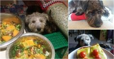 Woman feeds her dog a strictly vegan diet